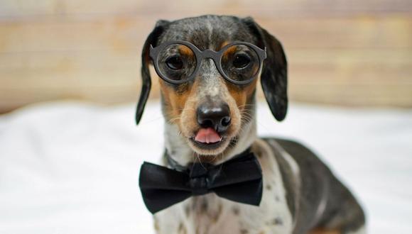 El perro artista, cuyo nombre no se conoce, por poco es mordido por otro can. (Foto referencial - Pixabay)