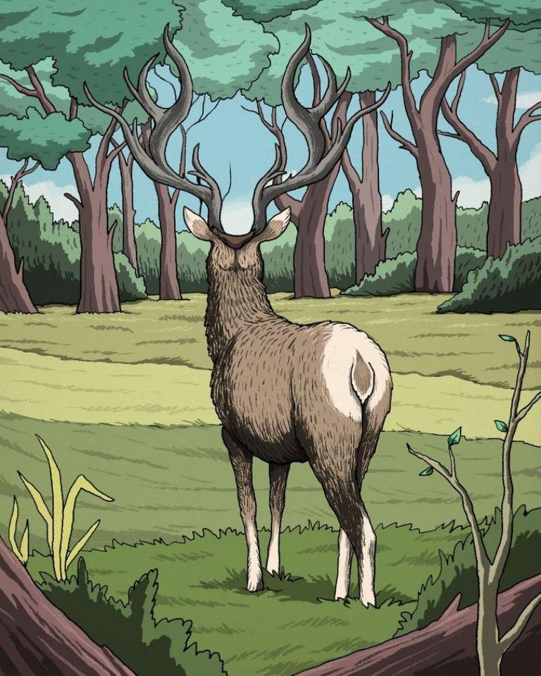 Encuentra al puma en la imagen del ciervo que pocos logran descifrar en las redes sociales. (Difusión)