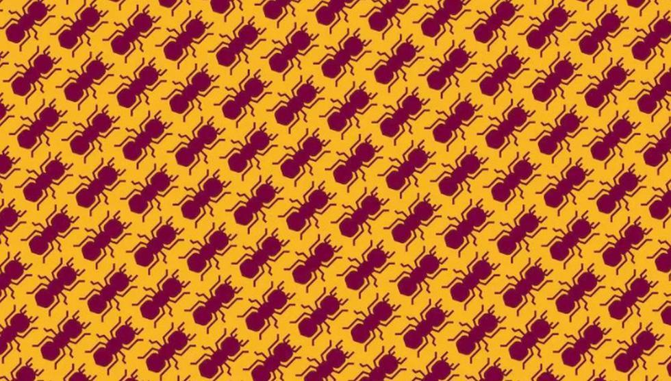 Halla las hormigas que caminan en sentido contario en este desafío. (Televisa)
