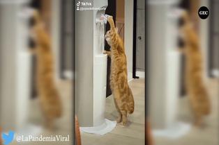 Viral: gatito usa dispensador para beber agua