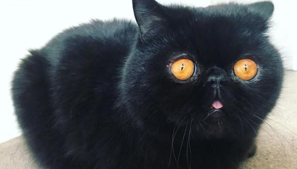 Un adorable gato conquistó los corazones de los usuarios de las redes sociales con su peculiar mirada. | Crédito: @goodboigremlin / Instagram.
