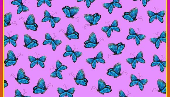 ¿Logras ver la mariposa diferente en la imagen? Prueba tus sentidos con este acertijo visual. | Foto: genial.guru