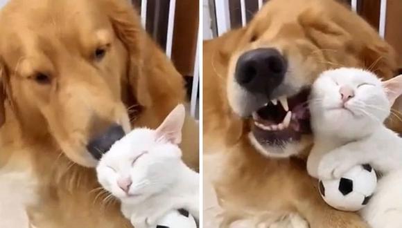 Las mascotas que protagonizan el video parecen haberse conocido hace ya mucho tiempo. (Foto: r/AnimalsBeingBros   Reddit)