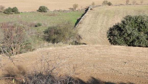 Este pequeño animal se encuentra ubicado en un lugar estratégico para no ser notado en el paisaje que se muestra a continuación.
