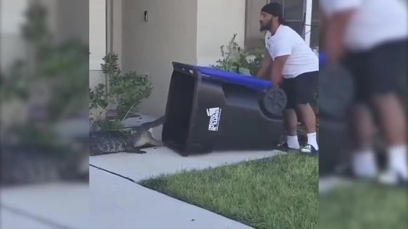 Virus: El valiente captura al caimán americano con un bote de basura de plástico