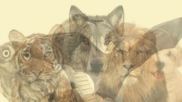 BTE7INJJ3NECXJPXXS45XJABFA - Personality test |  The animal you identify first in the photo will reveal the type of person you are |  Viral Challenge 2021 |  Trends |  Social networks |  Curiosities |  nnda nnrt |  OFF SIDE