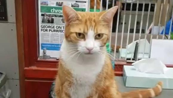 George es excepcional cazando ratones. Por eso fue reconocido. (Foto: Daily Mail | Caters Clips | YouTube)