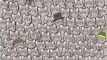 Encuentra al gato oculto entre los mapaches de este reto viral. (Foto: dudolf.com)