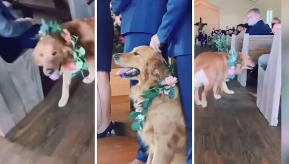 Cash, el perro del video, se mostró muy alegre durante la ceremonia. (Foto: Caters Clips | YouTube)