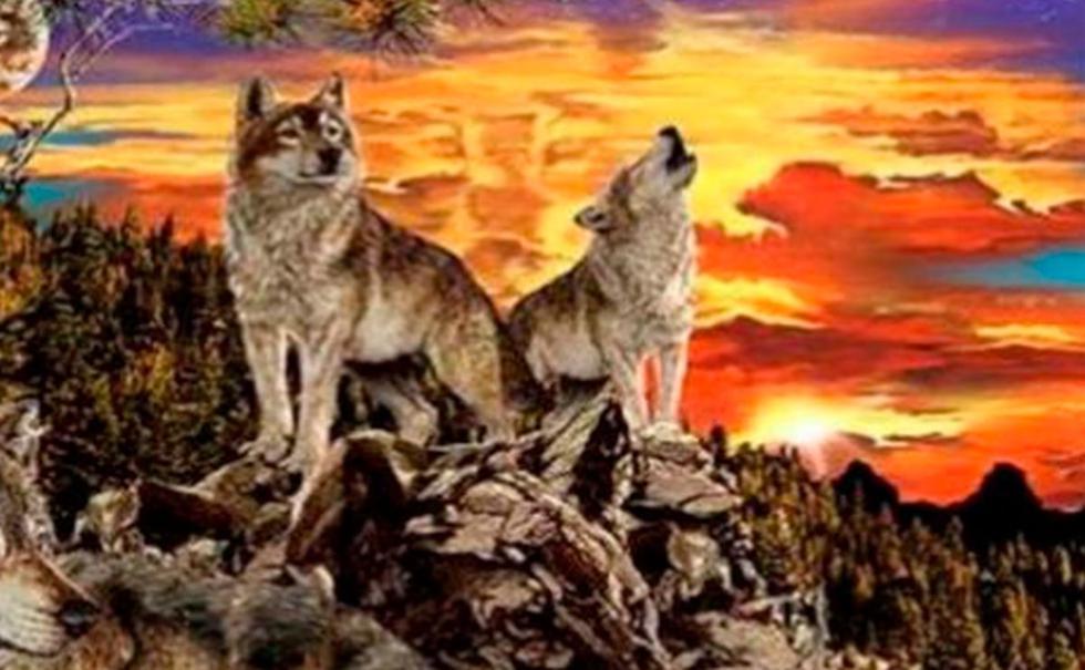 Observa con atención, ubica a los lobos que puedas y conoce más de tu personalidad (Foto: Facebook)