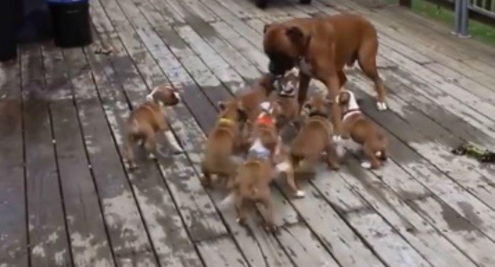 La confusión de los pequeños canes causó una singular reacción en el padre. (Facebook: @animal.esrevista)