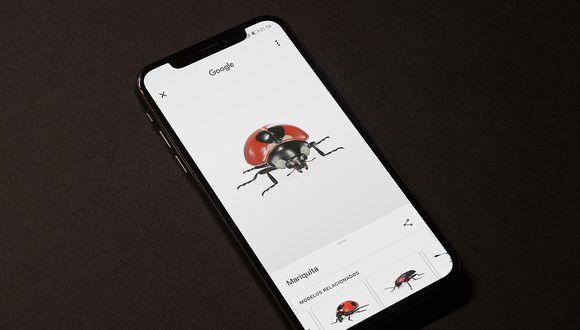 ¿Quieres asustar a tus amigos? Entonces no dejes de probar con este truco los insectos en 3D de Google. (Foto: Google)
