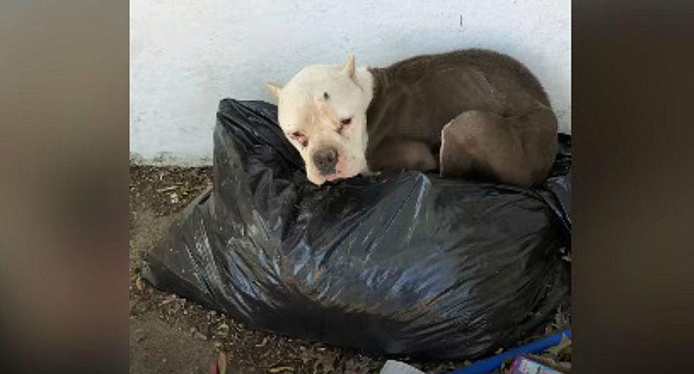 'Kita' fue encontrada echada sobre una bolsa de basura. (Facebook: @thedodosite)
