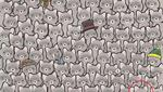 Esta es la ubicación del gato oculto entre los mapaches del reto viral que es tendencia en redes sociales. (Foto: dudolf.com)