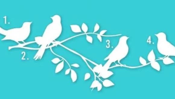 El test viral consiste en escoger un pájaro en la imagen para saber tu propósito en la vida. (Foto: iProfesional)