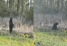 Extraña pose de un oso imitando a humano en Estados Unidos se vuelve viral [FOTO]