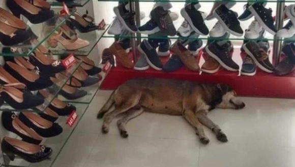 El perro ingresó a una zapatería para protegerse de lluvia y se quedó dormido en una esquina. Ello no fue del agrado de una clienta. (Foto: Planeta Cachorro / Facebook)