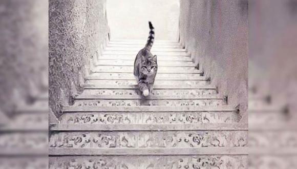 El gato sube o baja las escaleras. Tu respuesta te revelará detalles sobre tu forma de ser. | Foto: imgur