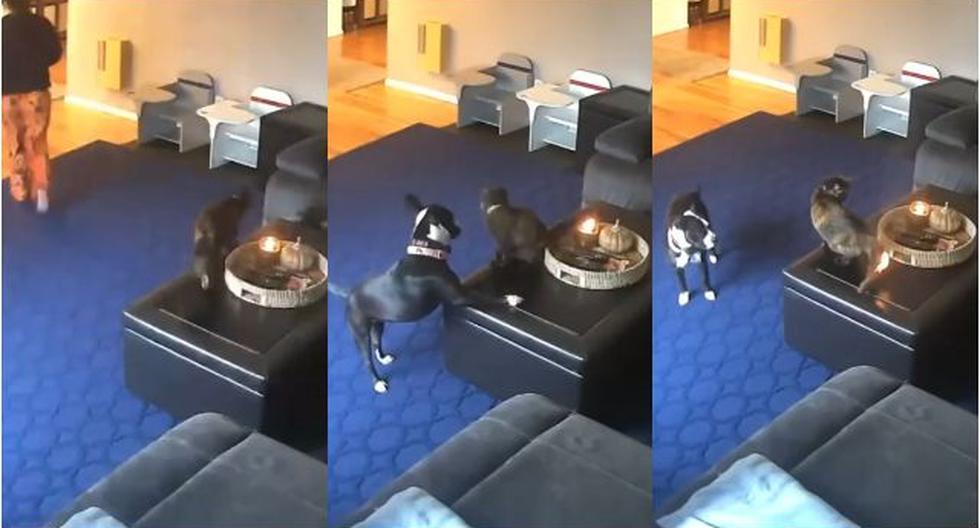 reaccion-te-dejara-boquiabierto-gato-se-quema-la-cola-jugando-con-un-perro-y-causa-furor-en-redes-video