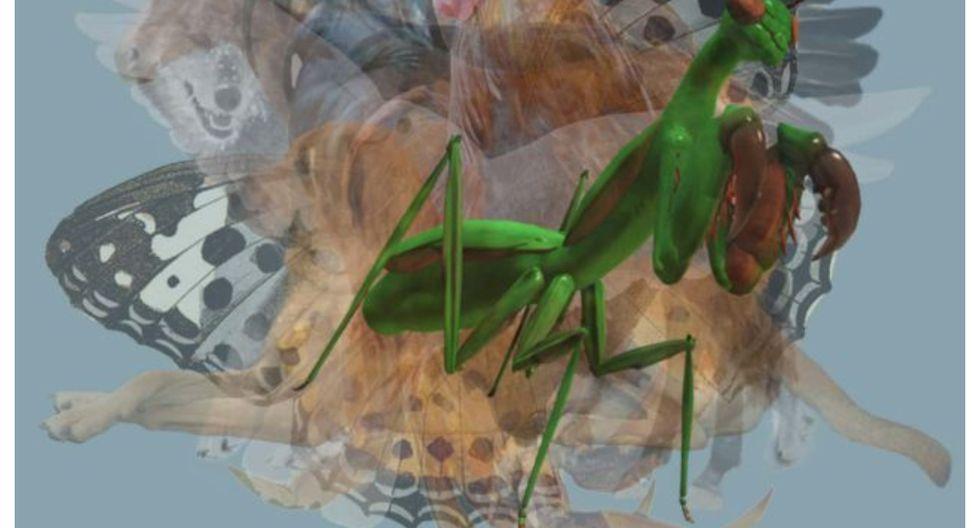 La mantis es conocida por sus excepcionales habilidades como cazadora. (Foto: web Los40)