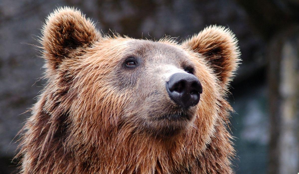 oso-hace-vivir-una-experiencia-inolvidable-y-aterradora-a-una-familia-china