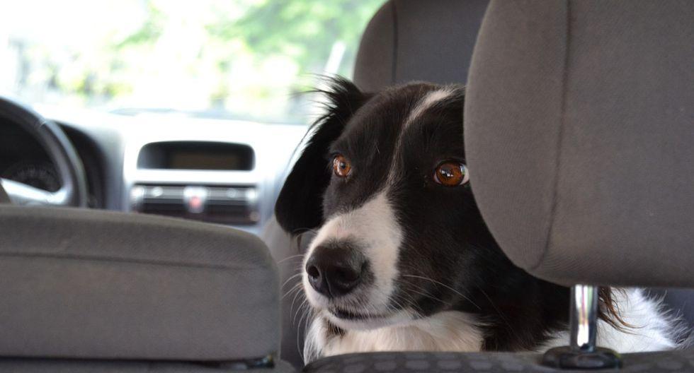 Foto 1 de 3 | El perro callejero sorprendió a la pareja al aparecer dentro del automóvil. | Foto: simpleclipsbyclicks en Pixabay. (Desliza hacia la izquierda para ver más fotos)