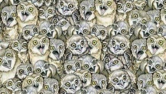 Reto viral: ¿Eres capaz de hallar al gato bebé oculto entre los búhos de la imagen? (Imagen: Pinterest)
