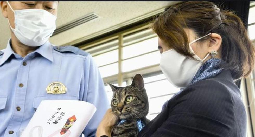 Gato recibió diploma de la policía de Tokio por haberle salvado la vida a un anciano . (Twitter)