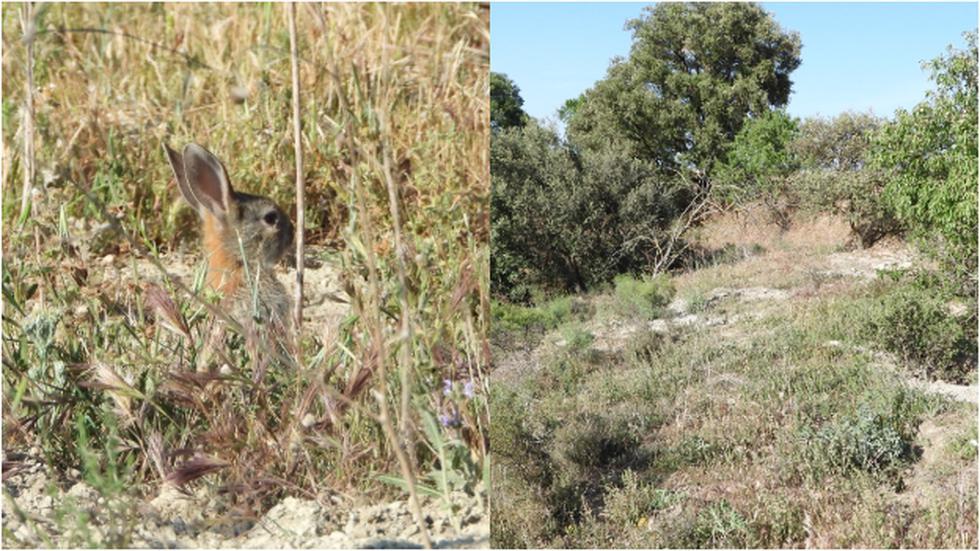 Reto Viral que te pide ubicar el conejo en la postal de la naturaleza en solo 10 segundos. (Fotos: Facebook)