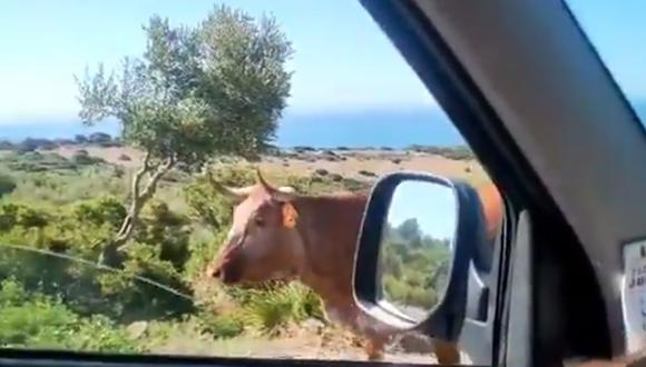 El video viral del momento: un hombre le preguntó a una vaca cómo llegar a Bolonia y esta le indica el camino a seguir. (Foto: @javiebenitez / Twitter)