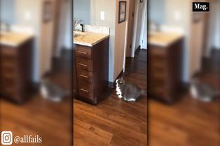 Viral: robusto gatito intenta saltar a lavadero sin éxito