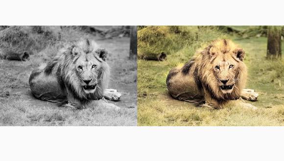 Conoce el método para poder colorear tus fotos de blanco y negro a color. (Foto: Colorize Images)