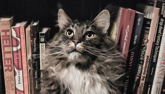 El gato conmovió a muchos con su reacción. (Foto referencial - Pexels)