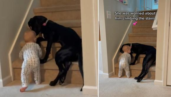 El conmovedor momento en que una perrita impide que un bebé suba las escaleras. (Foto: @hsearfoss / TikTok)