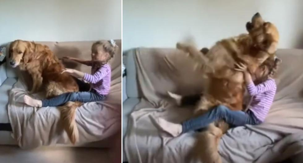Foto 1 de 3 | El perro dejó en claro que confía ciegamente en su dueña, pues se dejó caer hacia atrás sin problemas. | Foto: ViralHog en YouTube. (Desliza hacia la izquierda para ver más fotos)