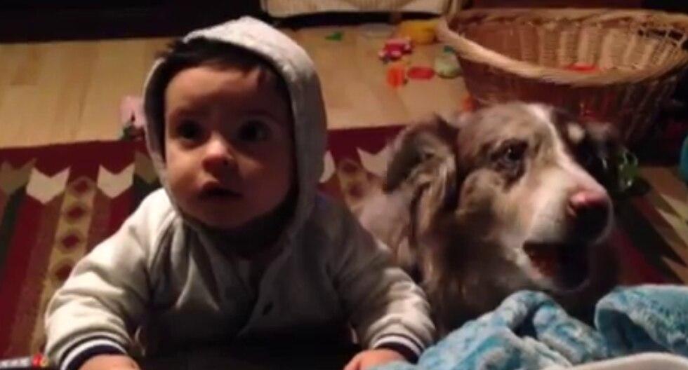 En Facebook se volvió viral el video de un perro que dijo la palabra que una mujer quería que su hijo repitiera. (Fotos: Sam Giovanini en YouTube)