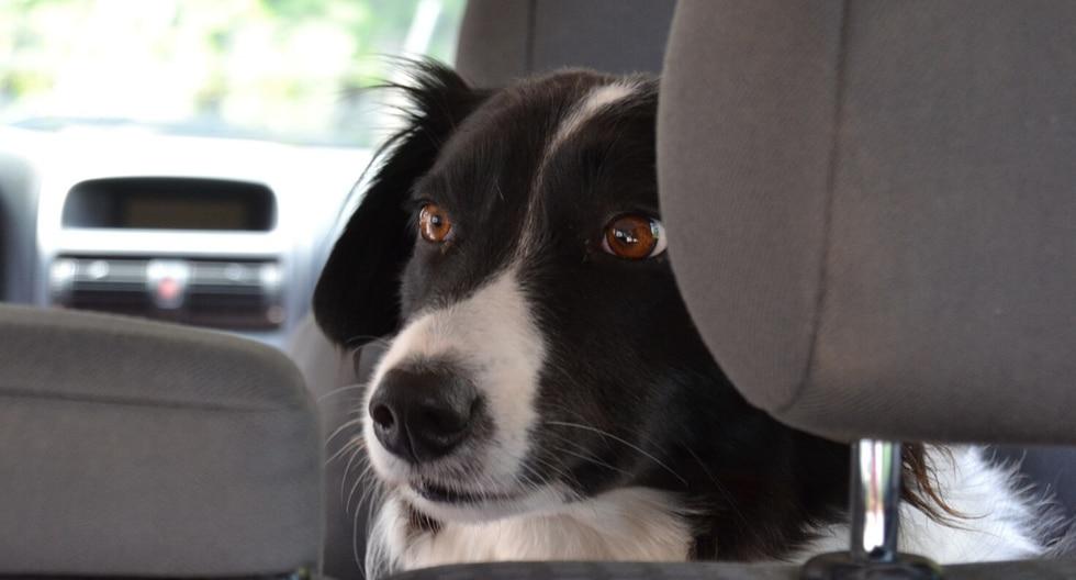 ¿Te imaginas subir a tu vehículo y encontrarte con un perro en busca de ayuda? Esta historia, sin duda, ha conmovido a más de uno en las redes sociales. (Foto: Pixabay/Referencial)