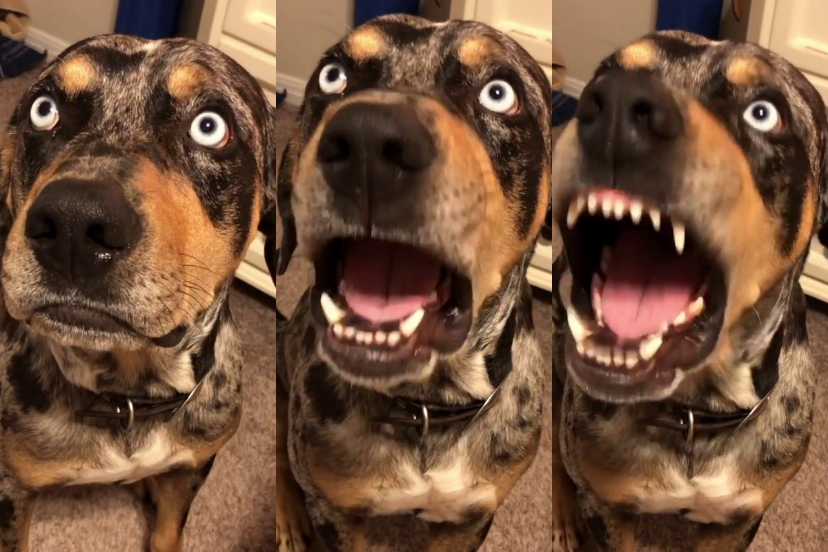 perro-conteston-se-enfrenta-a-sus-duenos-y-no-permiten-que-lo-reganen