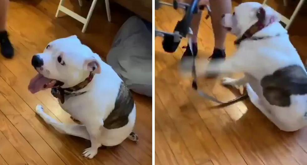 El can no pudo contener la emoción del momento. (Foto: @@RexChapman | Twitter)