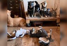 Reto viral: hay un perro oculto entre estas estatuas y tienes que encontrarlo