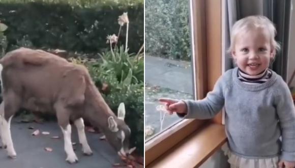 Sorpresa en Internet por la reacción que tuvo una niña al ver una cabra en el jardín de su casa. (Foto: @ivyandsophiesmith / TikTok)