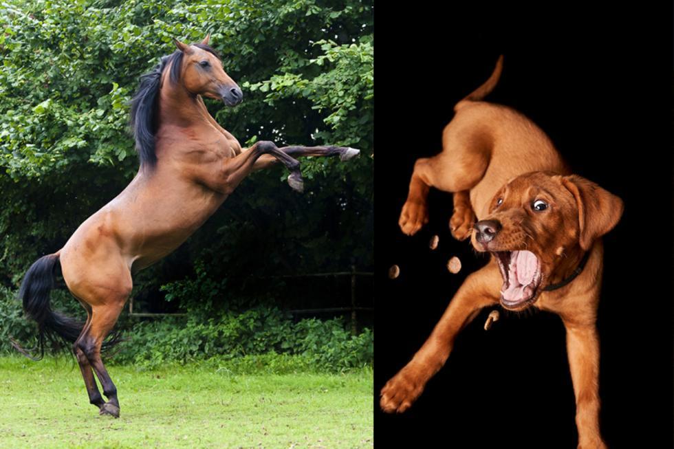 Fue la primera vez que el perro veía a un caballo y vaya que quedó muy sorprendido. (Foto: Pixabay/Referencial)