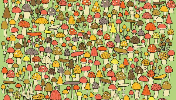 Hay un ratón entre los hongos y tienes que ubicarlo. (Foto: dudolf.com)