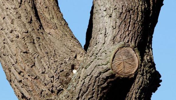 A continuación te mostramos una imagen que tiene escondido a un búho en el tronco de un árbol. Solo tienes 30 segundo para hallar la ubicación exacta.