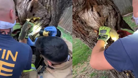 Los bomberos lograron auxiliar a una ardilla que llevaba horas atrapada en el agujero de un árbol.    Foto: Austin Fire Department/Facebook