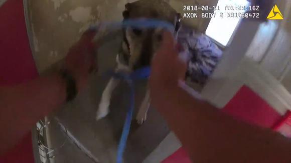 Policía graba el momento en el que rescatan a perros de un refugio que iba a incendiarse