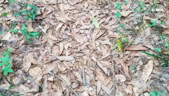 ¿Logras ver a la serpiente? Muy pocos superaron este complicado acertijo lógico.   Foto: genial.guru