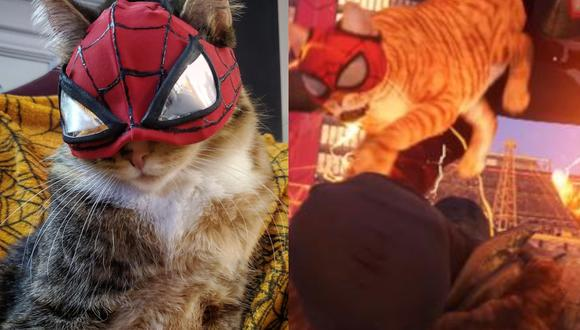 Spider-Cat, de Spider-Man Miles Morales, cobra vida gracias a tierno cosplay. (Foto: Captura)