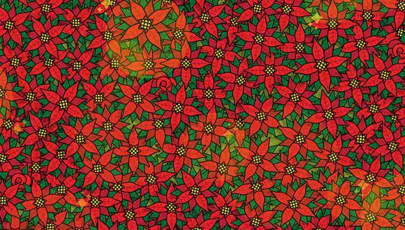 Tienes que hallar las 4 rosas entre las flores de Nochebuena. (Foto: Noticieros Televisa)