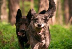 """Esta """"pelea"""" de perros será lo más adorable que verás hoy"""